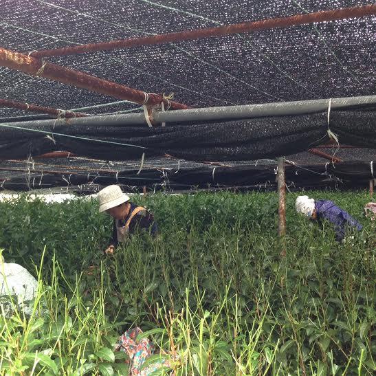 Tohei's Farm5