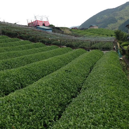 Tohei's Farm6